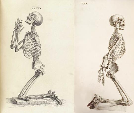 540x456 Skeleton Praying, Tab Xxxvi, Osteographia, 1733, And Skeleton