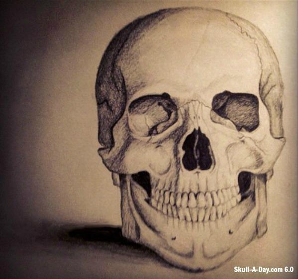 599x562 Anatomical Skull Drawing