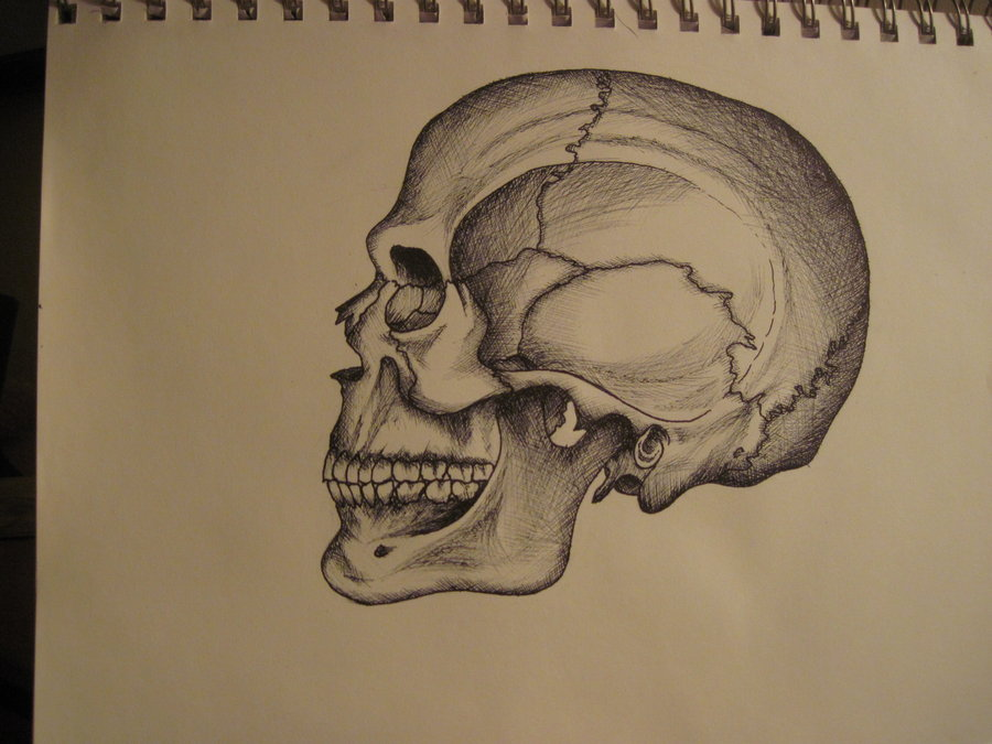 900x675 Anatomical Drawing Of Skull