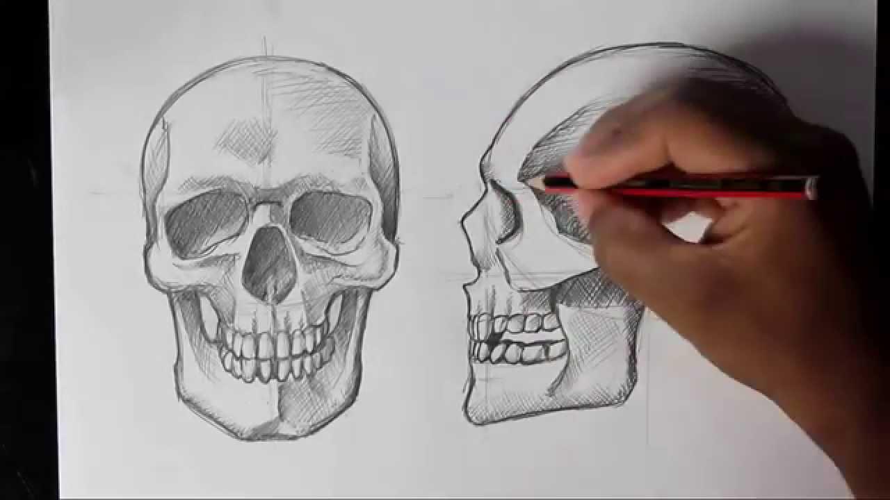1280x720 How To Draw Human Skull Frontprofile Human Anatomy