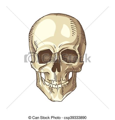 450x470 Illustration Of Anatomical Skull Isolated On The White Eps