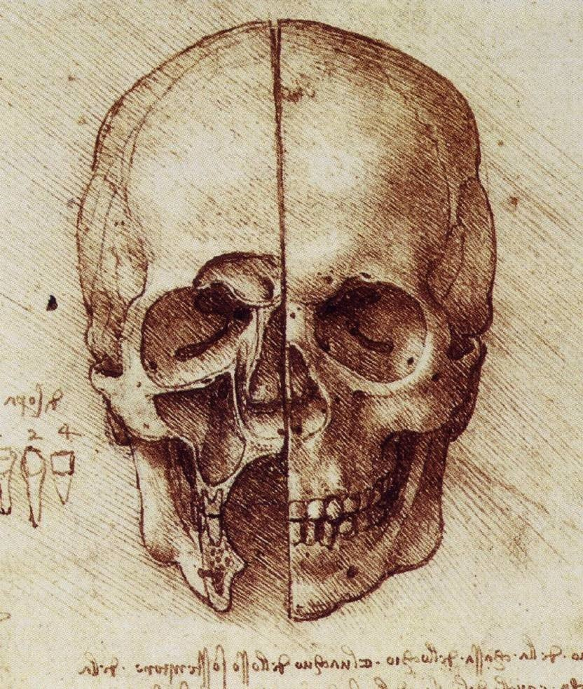Anatomical Skull Drawing at GetDrawings.com | Free for personal use ...