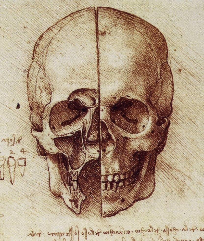 832x983 Leonardo Da Vinci's Anatomical Sketches. Human Anatomy, Anatomy