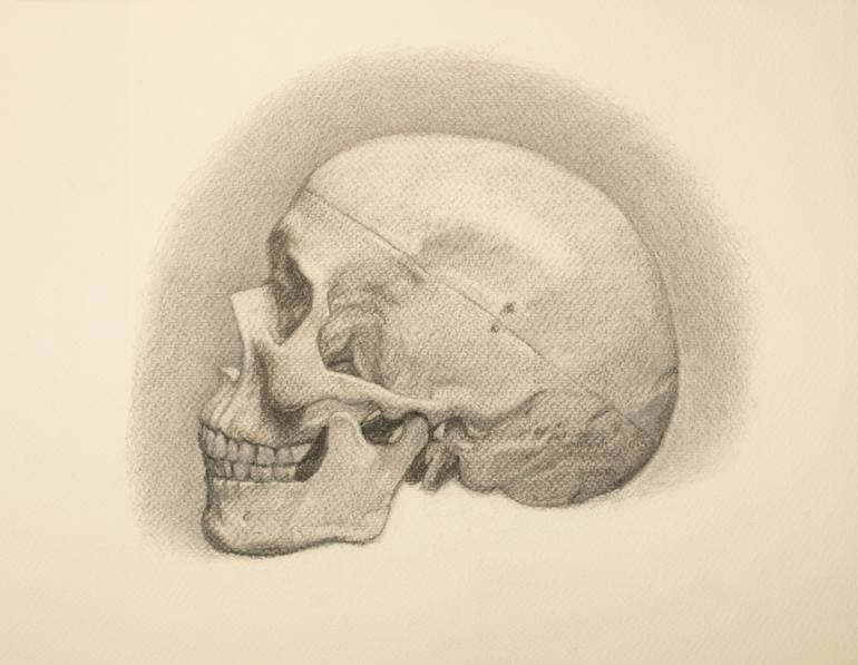 770x597 Saatchi Art Charcoal Study Of An Anatomical Skull Model Drawing