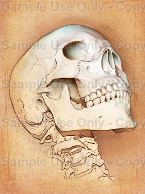 300x400 The Skull