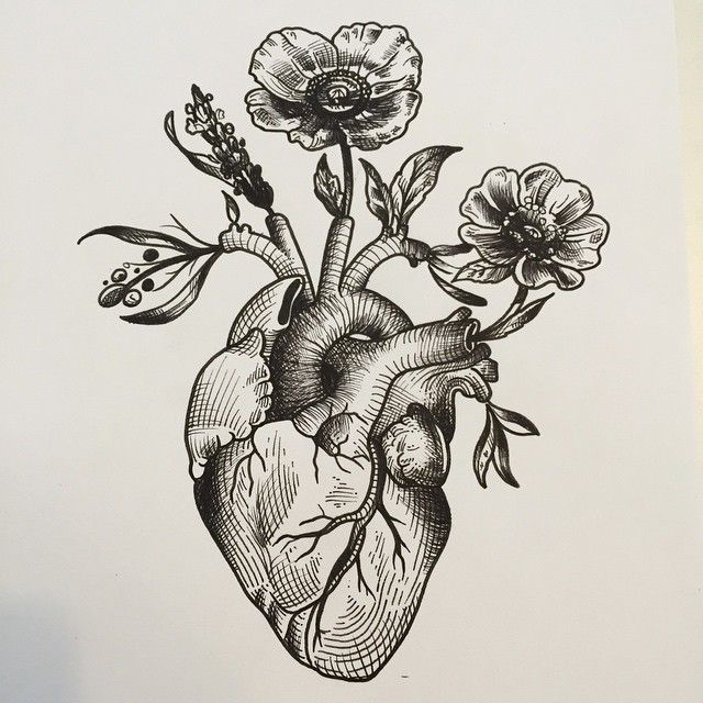 Anatomically Correct Heart Drawing at GetDrawings.com | Free for ...