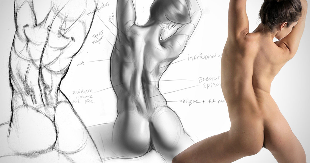 1200x630 Anatomy Drawing Critiques The Lower Back Proko