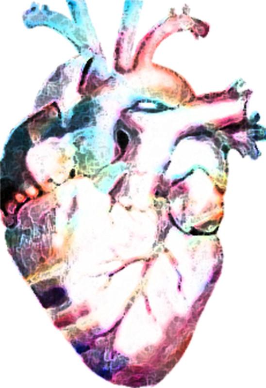 548x800 Anatomy