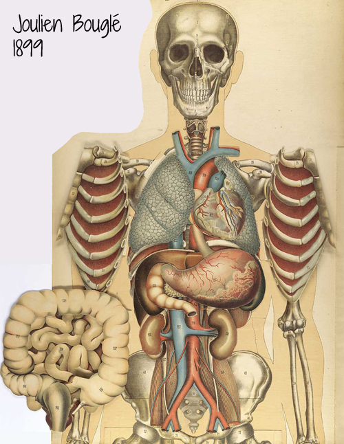 500x646 Bougle's Heart
