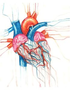 232x300 Watercolor Heart Painting, Anatomical Heart Drawing, Scientific