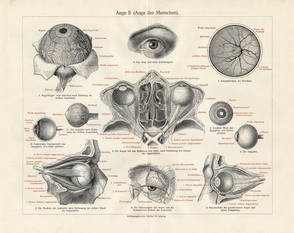 974x771 Anatomy Of Eye Drawing