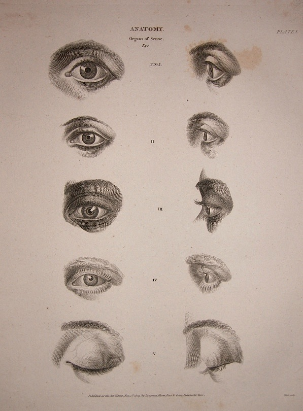 597x810 Figure Drawing How To Draw Eyes