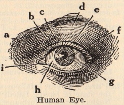 400x340 Klassic Human Eye Anatomy Drawing The Eye Si(Gh)t