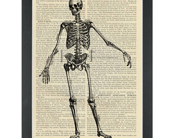 340x270 Anatomy Drawing Etsy