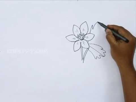 480x360 How To Draw An Anemone