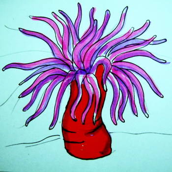 350x349 How To Draw A Sea Anemone