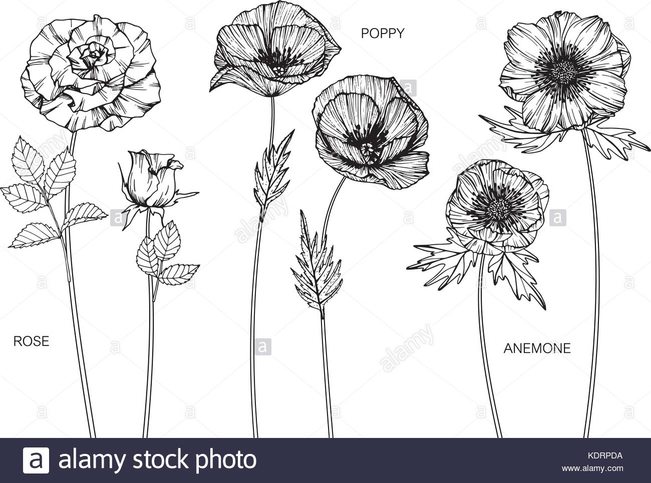 1300x965 Greeting Card Anemone Flower Vector Stock Photos Amp Greeting Card
