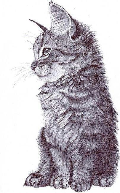 405x650 Cats Is Art