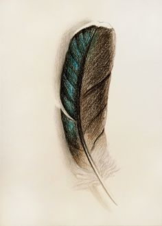 236x330 Images About Feather On Feathers, Peacock