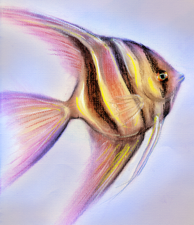 774x900 Angelfish Drawing By Isabellany