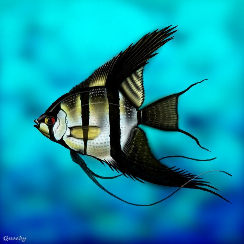 850x850 Angelfish An Animals Speedpaint Drawing By Andypandy31
