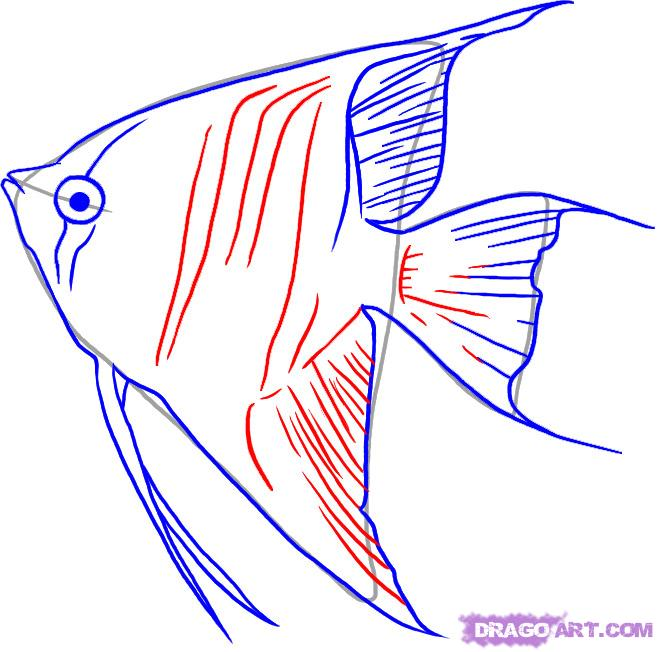 658x652 How To Draw Angelfish, Step By Step, Fish, Animals, Free Online