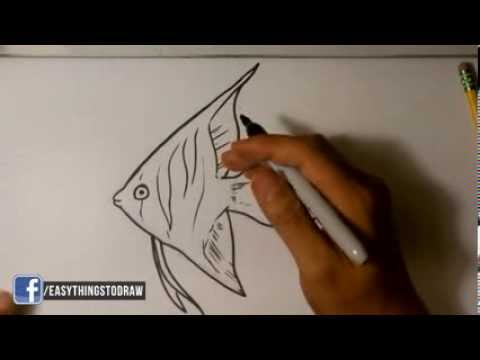 480x360 How To Draw An Angel Fish Easy Drawings