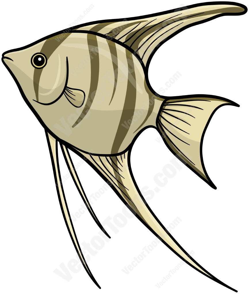 869x1023 Suddenly Angel Fish Drawing Striped Angelfish