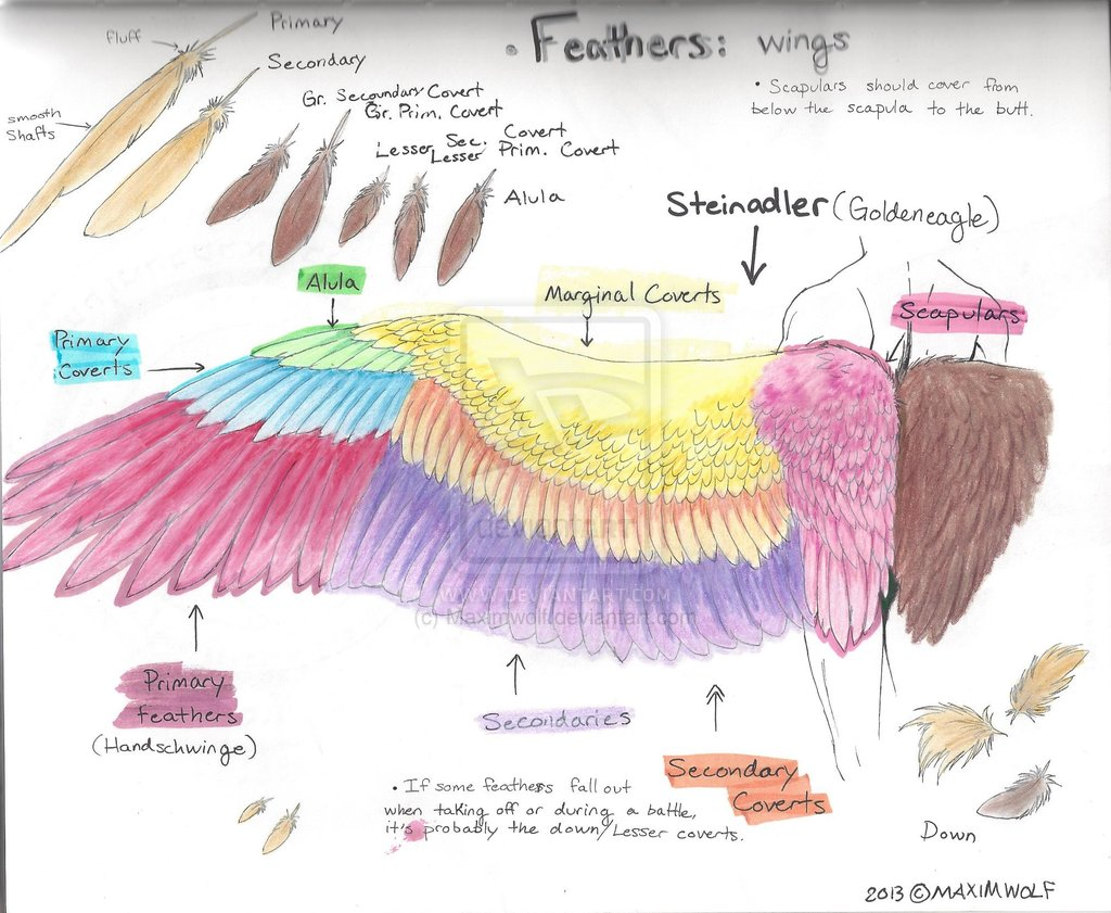 1024x841 Feathers Tutorial 1 Wings By