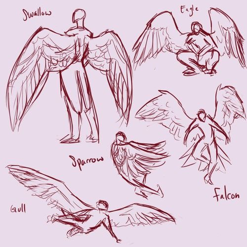 500x500 Wing Reference Art References Drawings, Babies