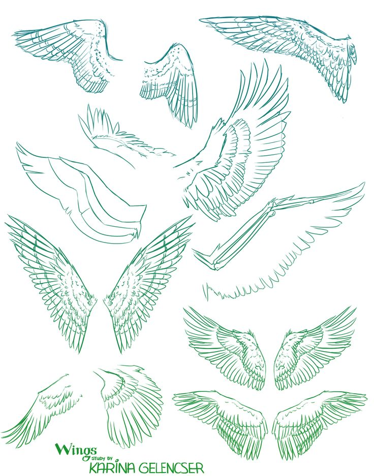 736x938 70 Best Creature Anatomy Wings Images On Drawing