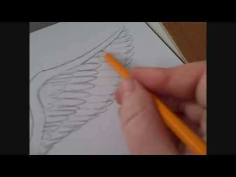 480x360 How To Draw An Angels Wing Video