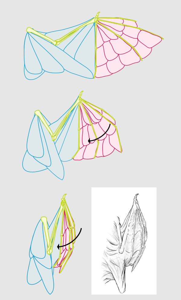 600x991 Taking Flight A Beginner's Guide Into Drawing Wings