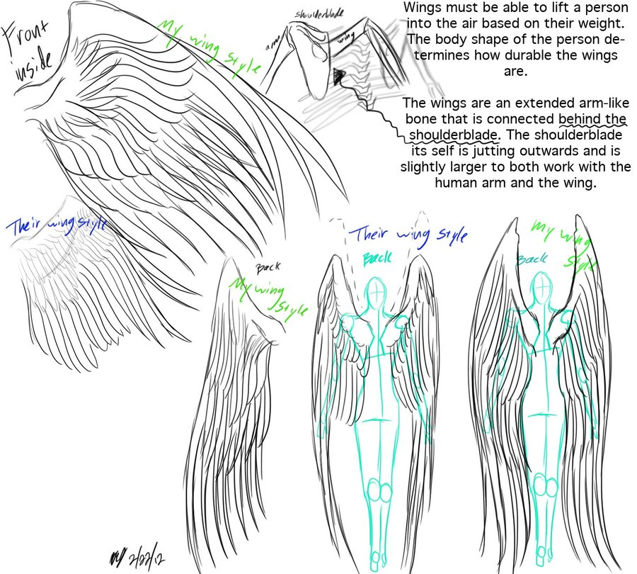900x810 Wings Anatomy And Reference By Embracedarkshade