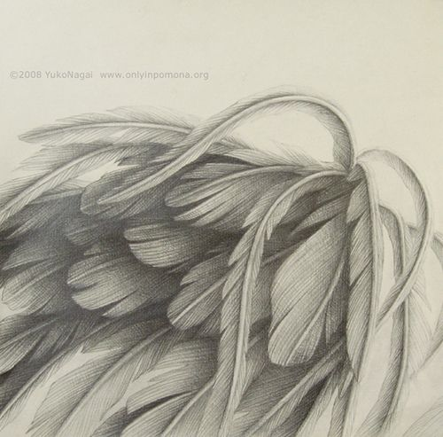 500x493 Realistic Angel Wings Drawing
