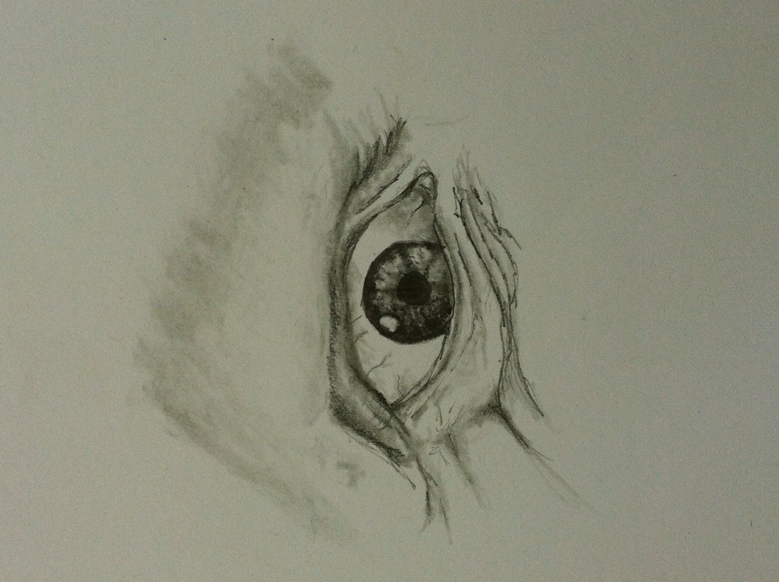 2592x1936 Angry Eye I Drew Sketching Angry Eyes, Drawing