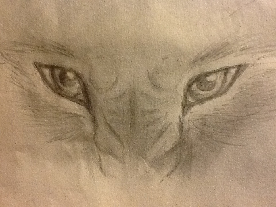 960x720 Angry Eyes Drawing Angry Wolf Drawing Images Pat That