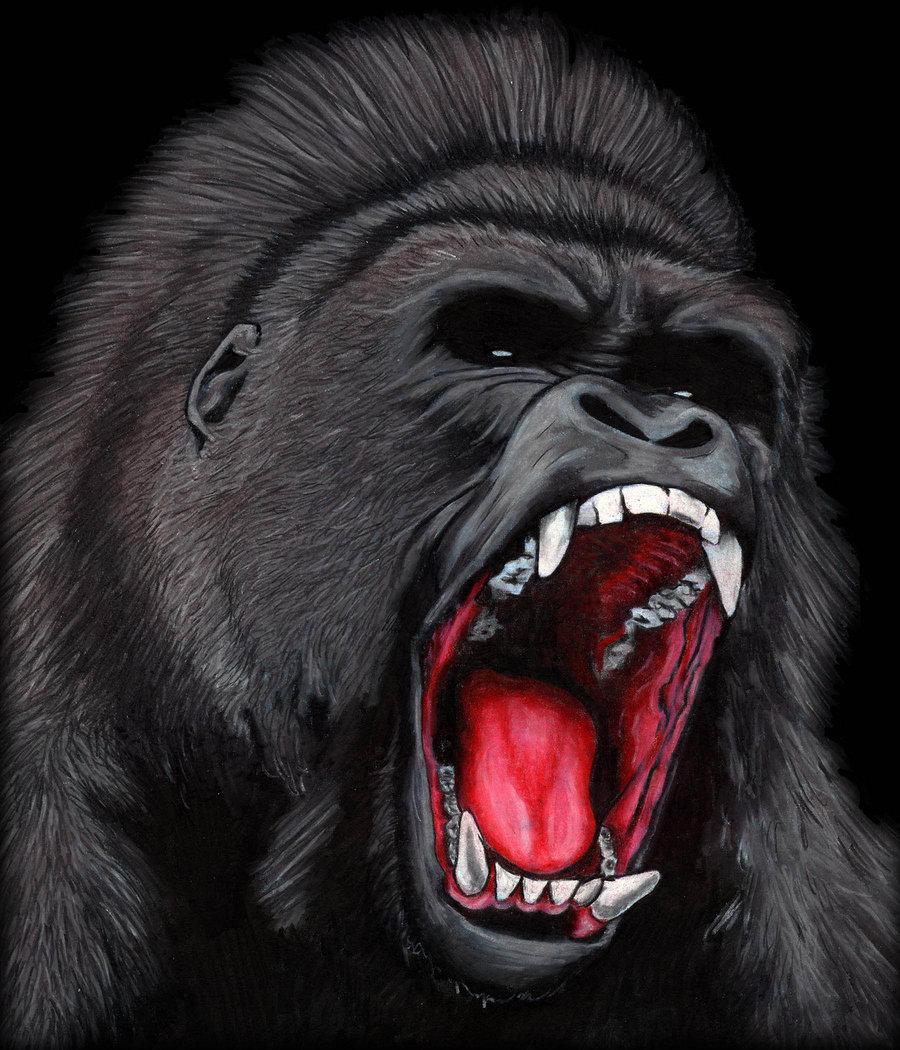 900x1050 Angry Silverback Gorilla Drawing Roaring Gorilla