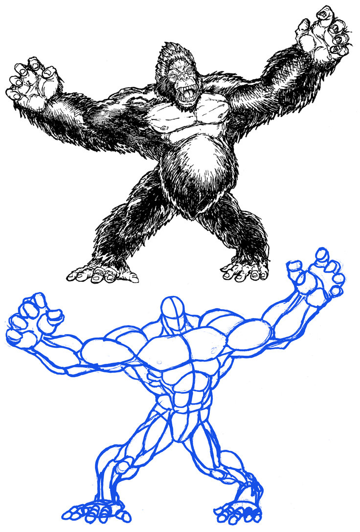 736x1086 How To Draw Kong By Stvnhthr