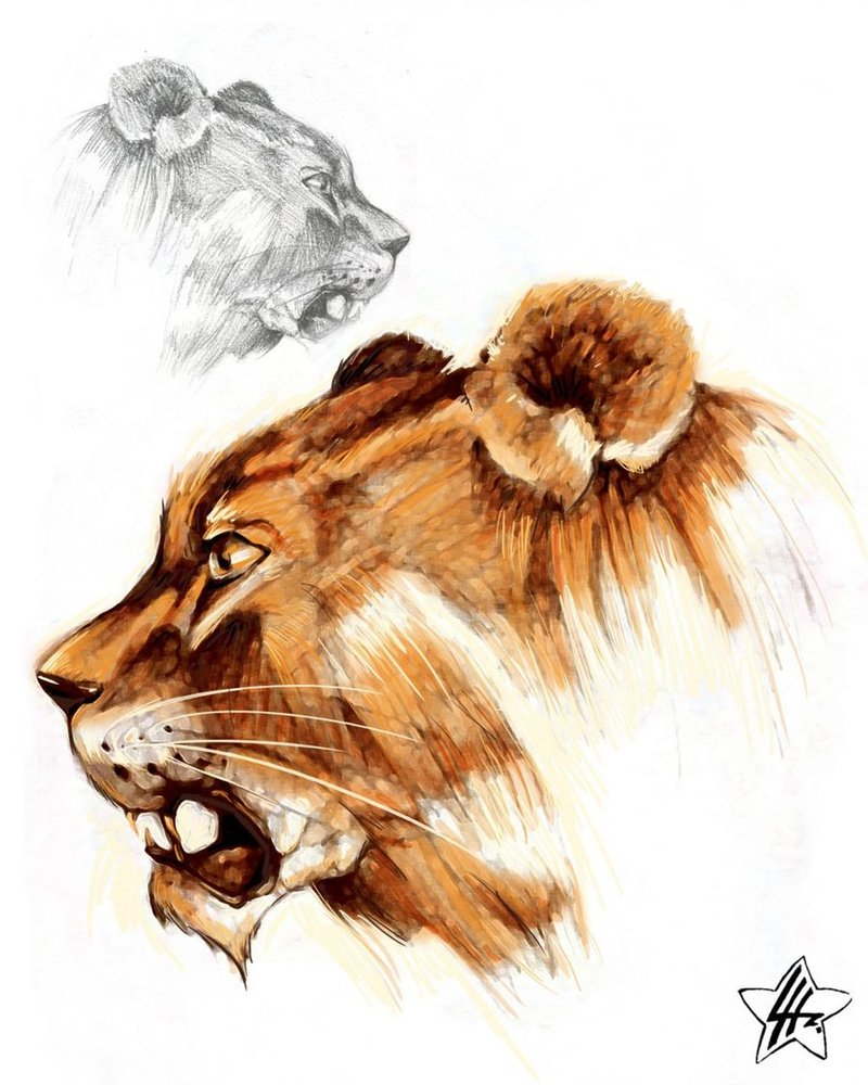 800x1000 An Angry Lion By Lougirlou