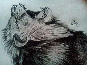 300x225 Angry Lion Drawings Fine Art America