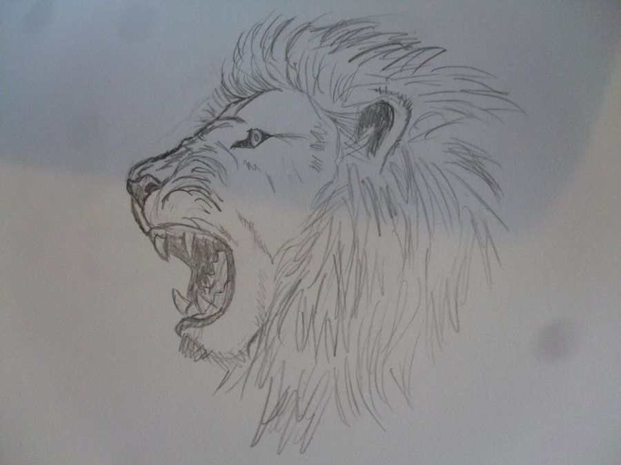 900x675 Angry Lion By Acmilla