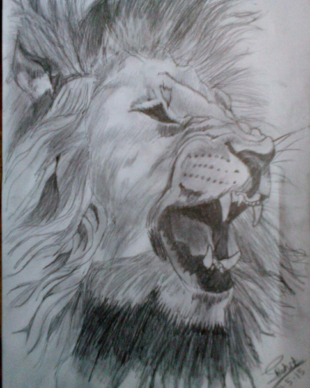 1080x1350 Angry Lion Pencil Sketch By Me!! Pencil Sketches Drawn By Me