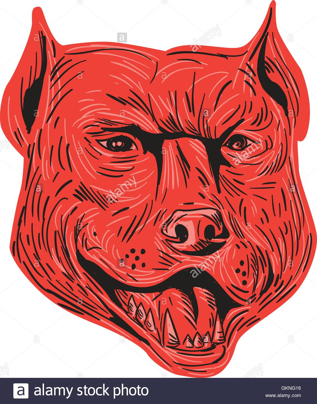 1093x1390 Drawing Sketch Style Illustration Of An Angry Pitbull Dog Mongrel