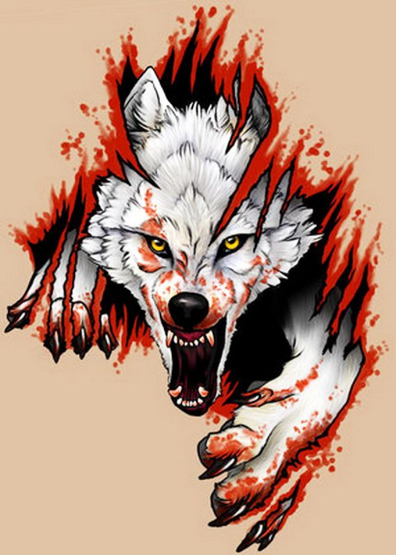 570x800 Angry Wolf With Claws