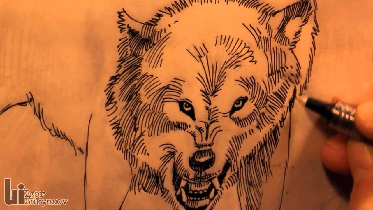 1280x720 Drawing An Angry Wolf