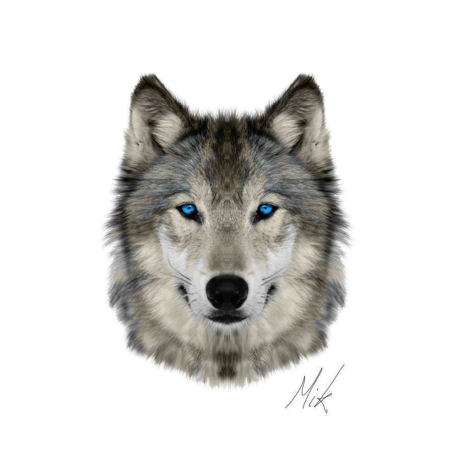 894x893 Wolf Face By Mikstyx