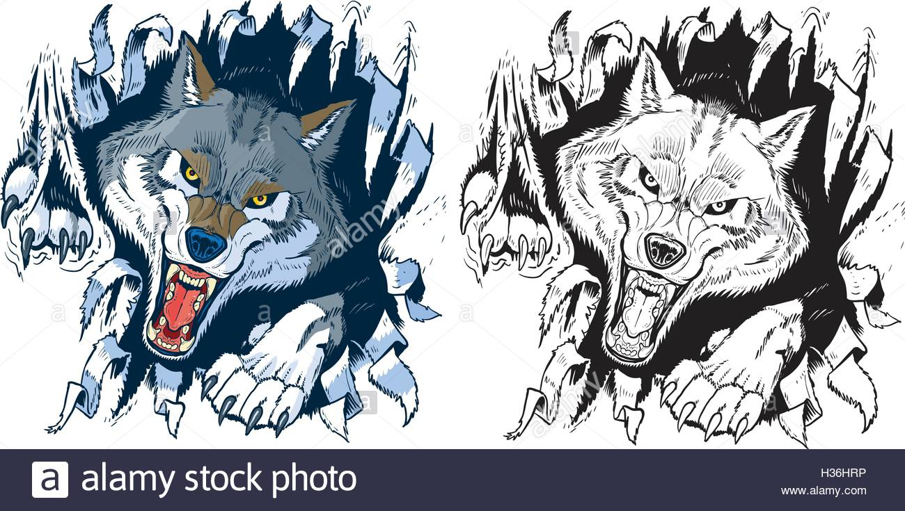 1300x735 Wolf Teeth Face Angry Stock Photos Amp Wolf Teeth Face Angry Stock