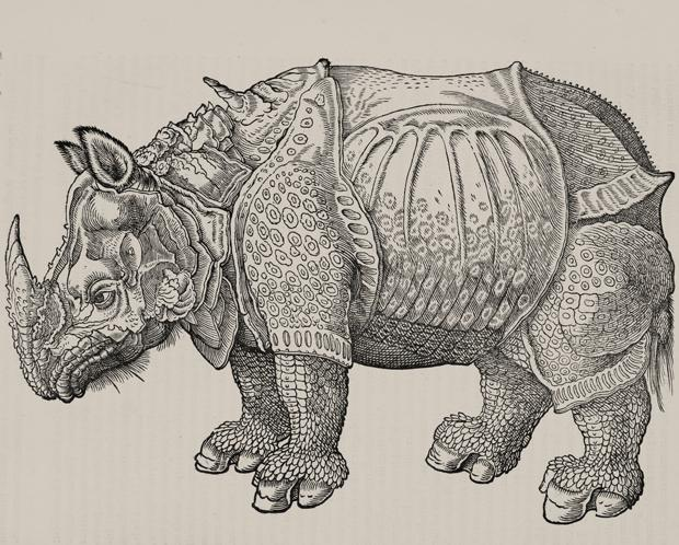 620x498 6 Animals Portrayed Incorrectly In Early Taxonomic Drawings