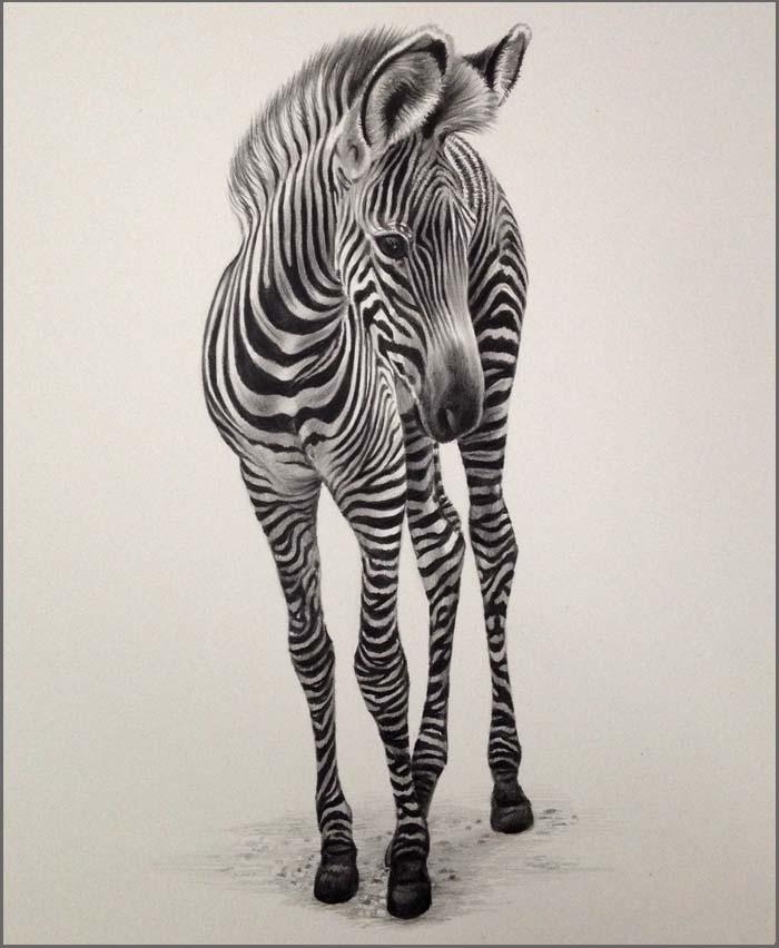 700x852 Julie Rhodes, Original Wildlife Art, Wildlife Pencil Drawings